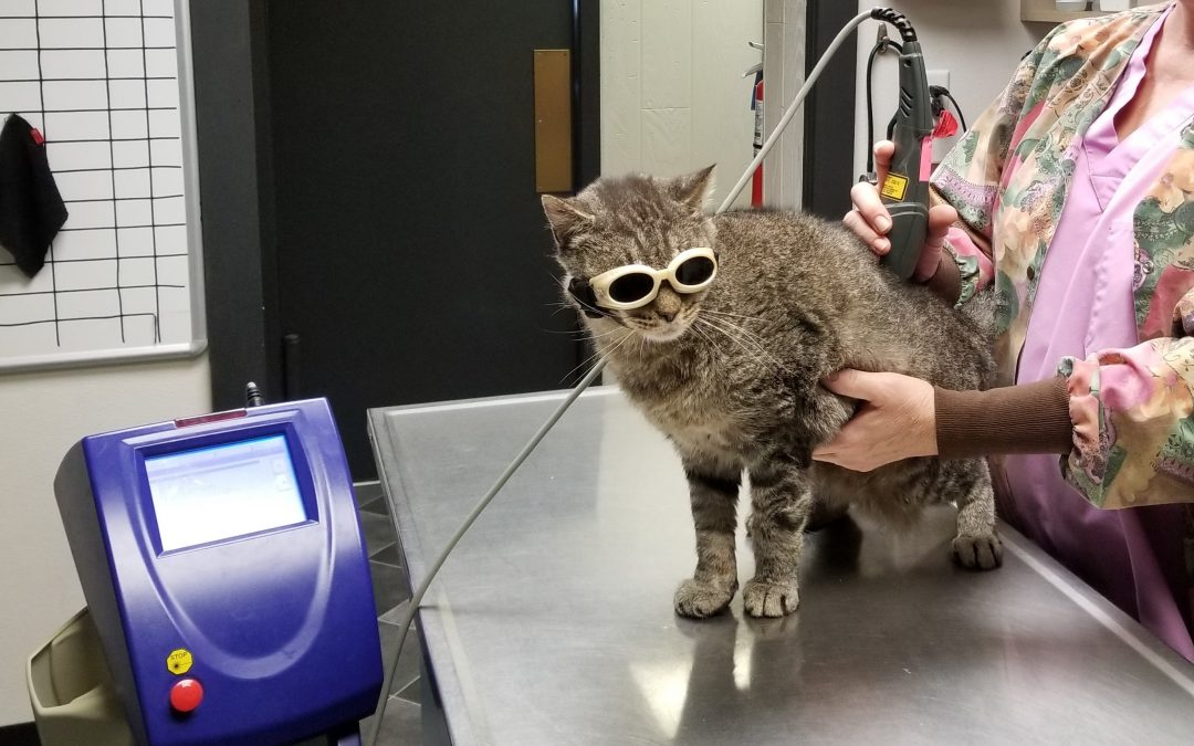 Laser Therapy: Shining a Light on the Problem