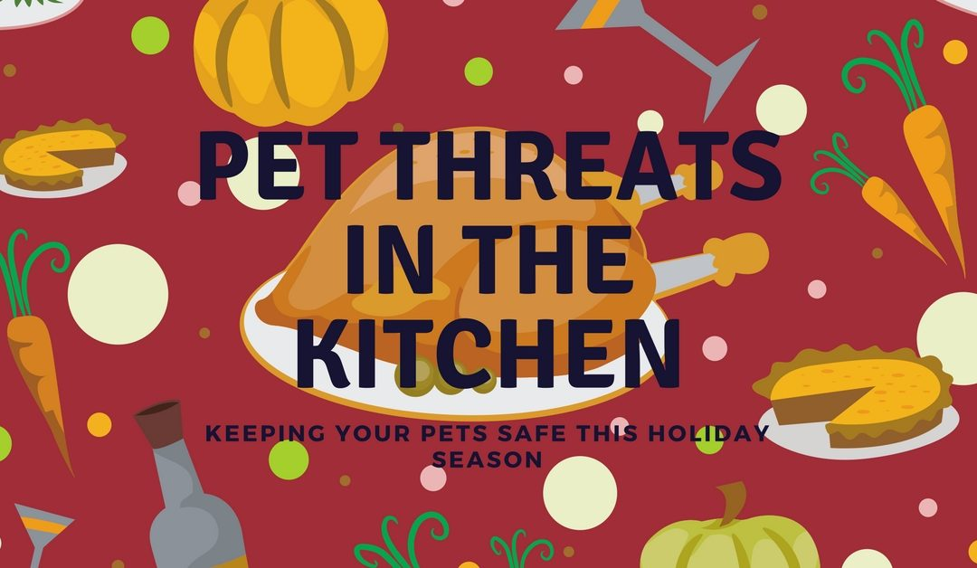 Pet Threats in the Kitchen
