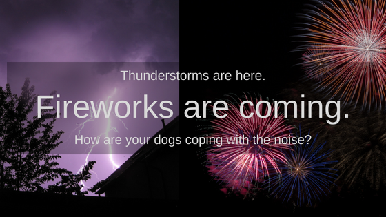Scaredy Dogs: Addressing Thunderstorm and Fireworks Phobias