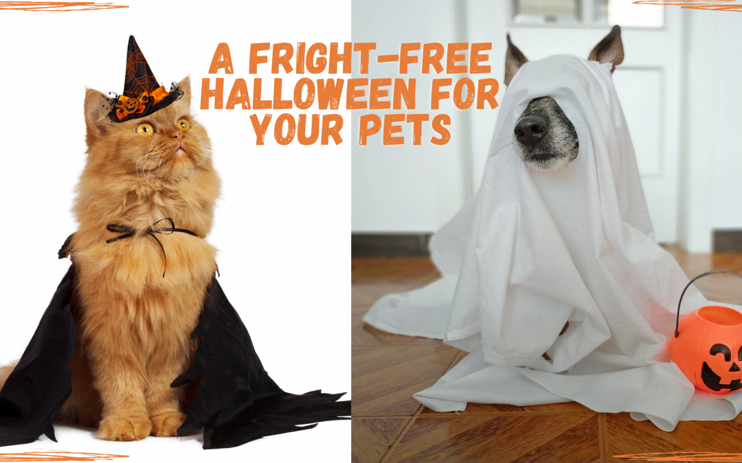 A Fright-Free Halloween For Your Pets